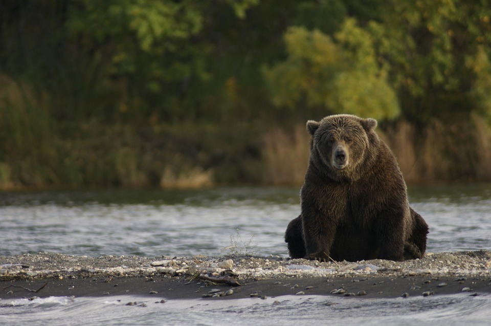 bear sitting river side.jpg