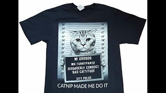 cat mugshot.jpg