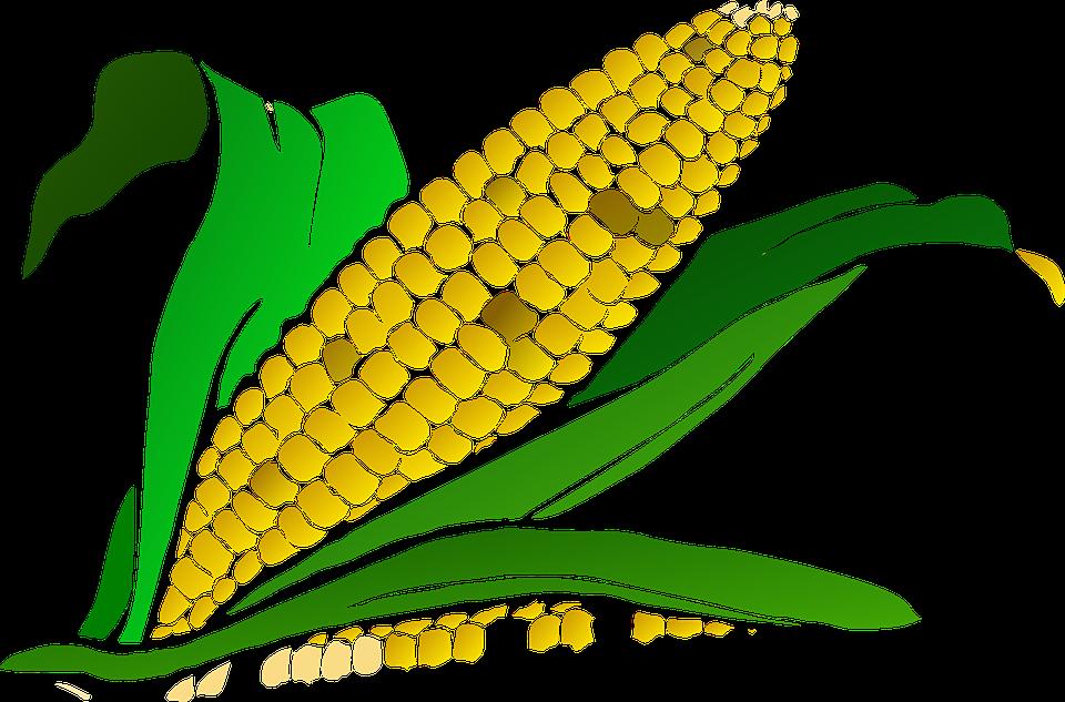 corn-296956_960_720.png