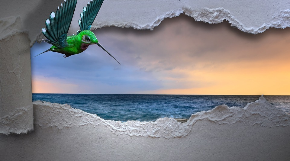 hummingbird-3347576_960_720.jpg
