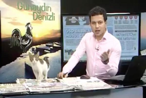 kitten interrupts news broadcast.jpg