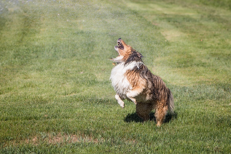 sprinkler-dog.jpg