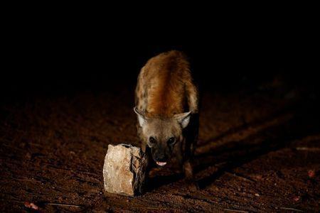 A Hyena man4.jpg