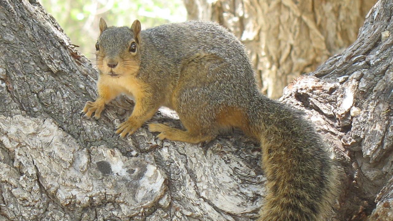 CHristmas tree gnawing squirrels.jpg