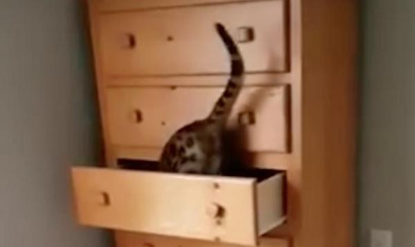 Clever-cat-shuts-itself-inside-drawer.jpg