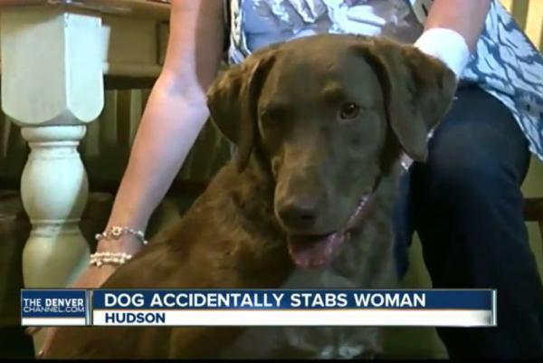 Colorado-woman-stabbed-by-her-knife-loving-dog.jpg