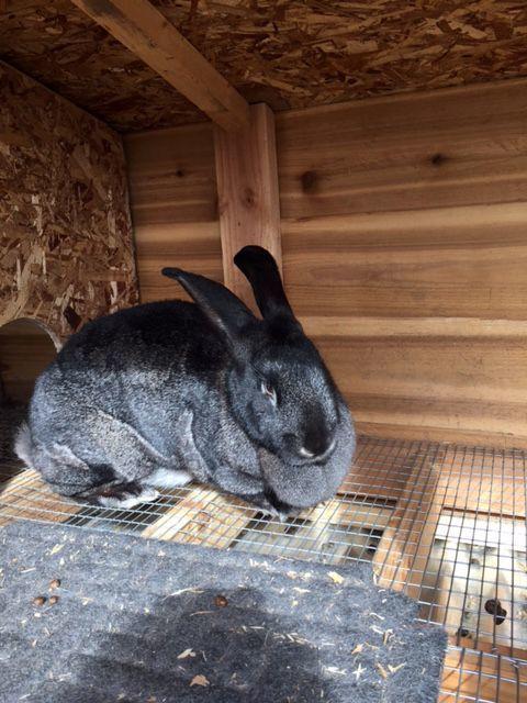 Dolly the bunny.jpg