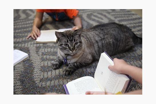 図書館猫残留.jpg