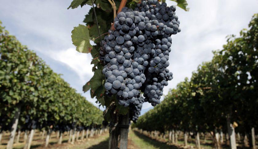 温暖化 フランスワイン.jpg