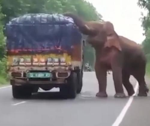 Elephant-stops-traffic-to-pilfer-potatoes-from-truck.jpg