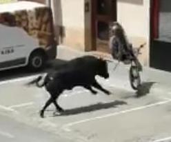 Escaped-bull-attacks-motorcycle-in-Spanish-city.jpg