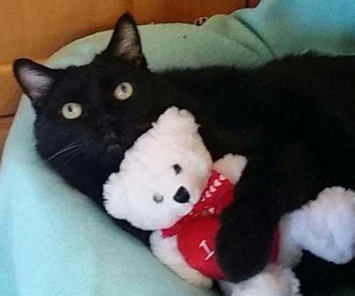 Irish-vet-clinics-job-posting-seeks-paid-cat-cuddler.jpg