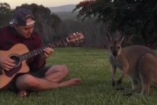 Jazz fun wallaby.jpg