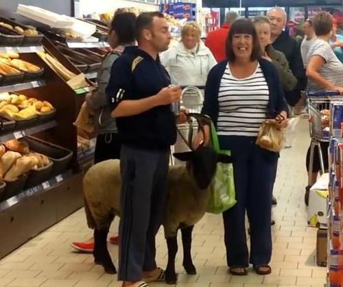 Man-skirts-no-dogs-policy-by-bringing-pet-sheep-into-store.jpg