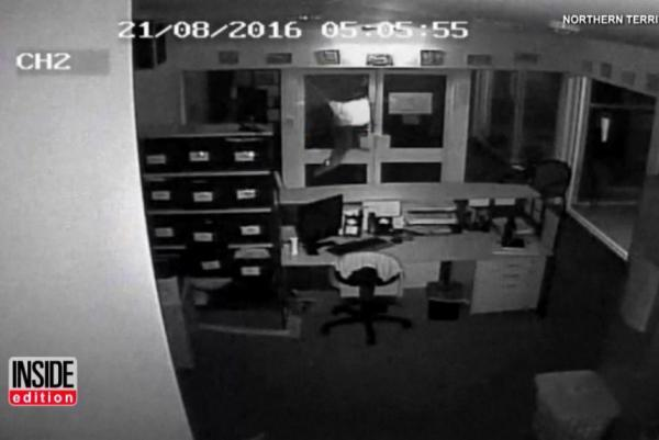 Police-probe-video-of-vandals-setting-crocodiles-loose-in-school-office.jpg