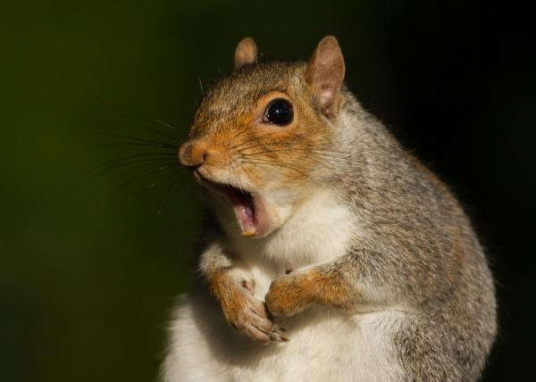 Squirrel-causes-power-outage-near-Buffalo-airport.jpg