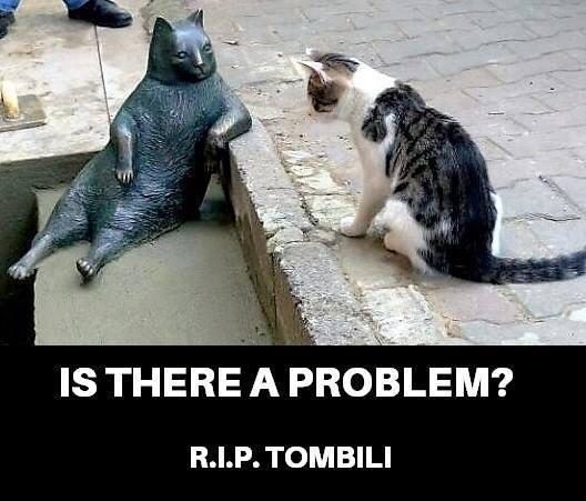 Tombili the cat4.jpg