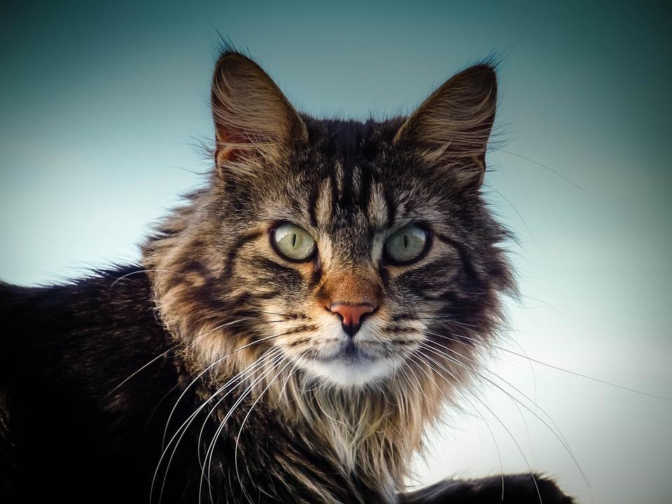 alert cat.jpg