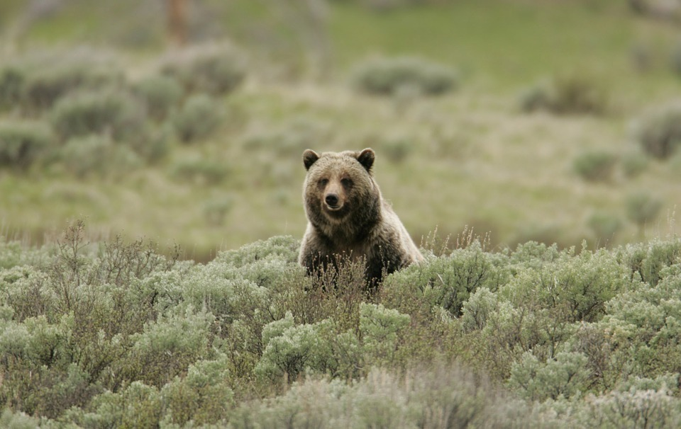 bear-sitting.jpg