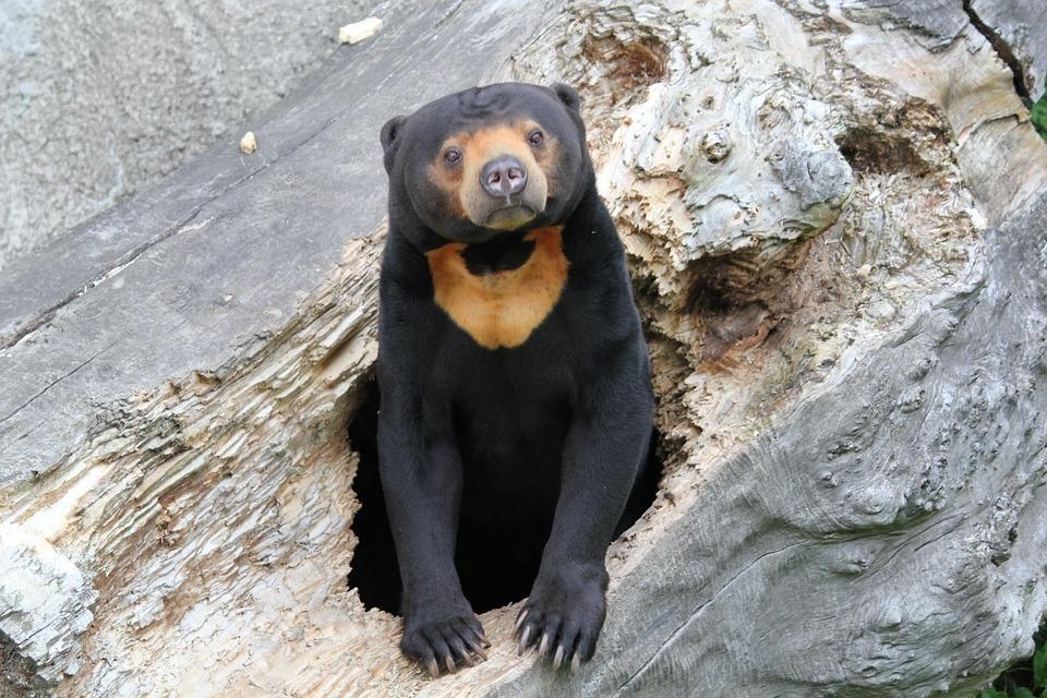 bear-sun-bear.jpg