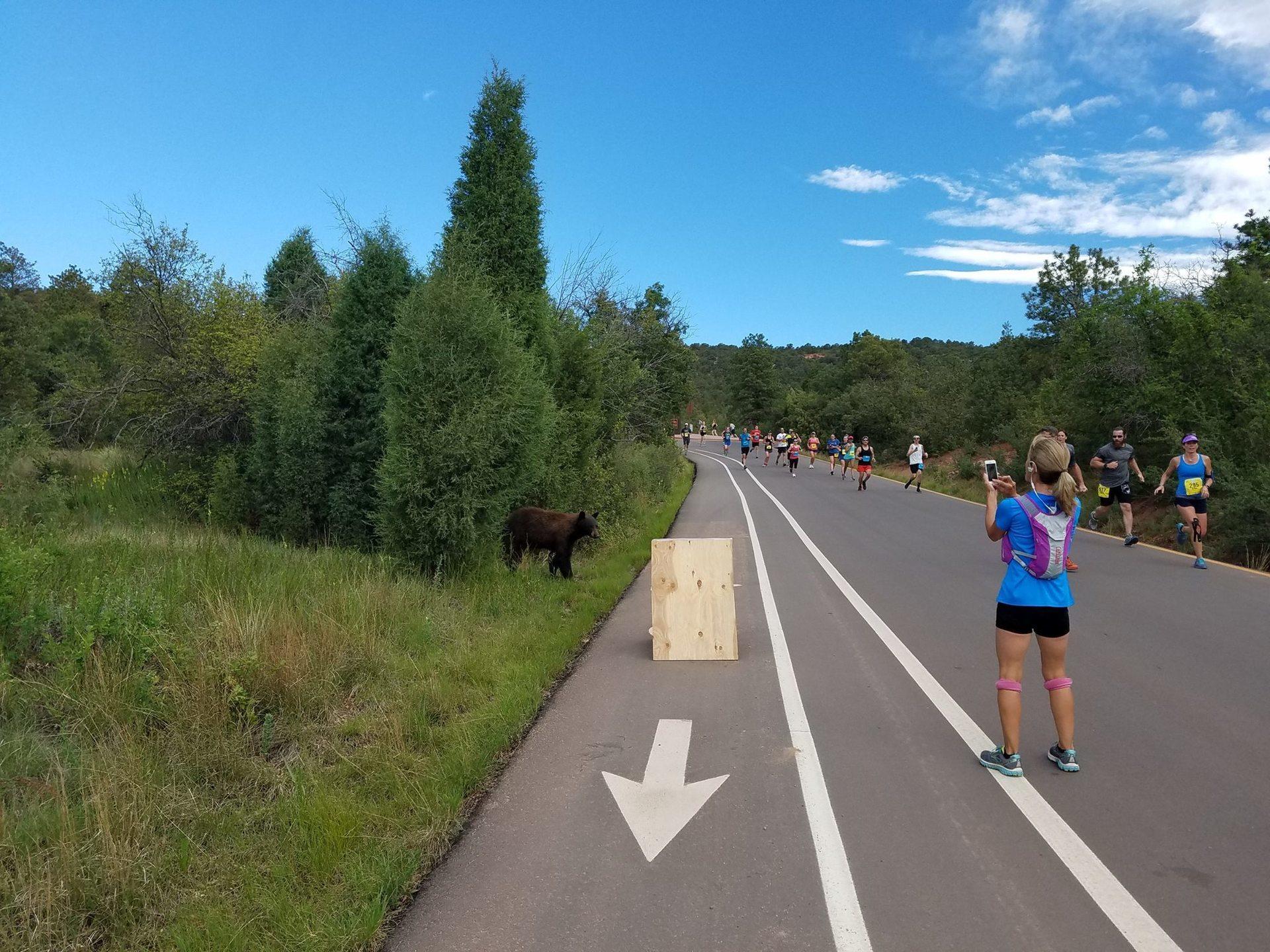 bear in running race2.jpg
