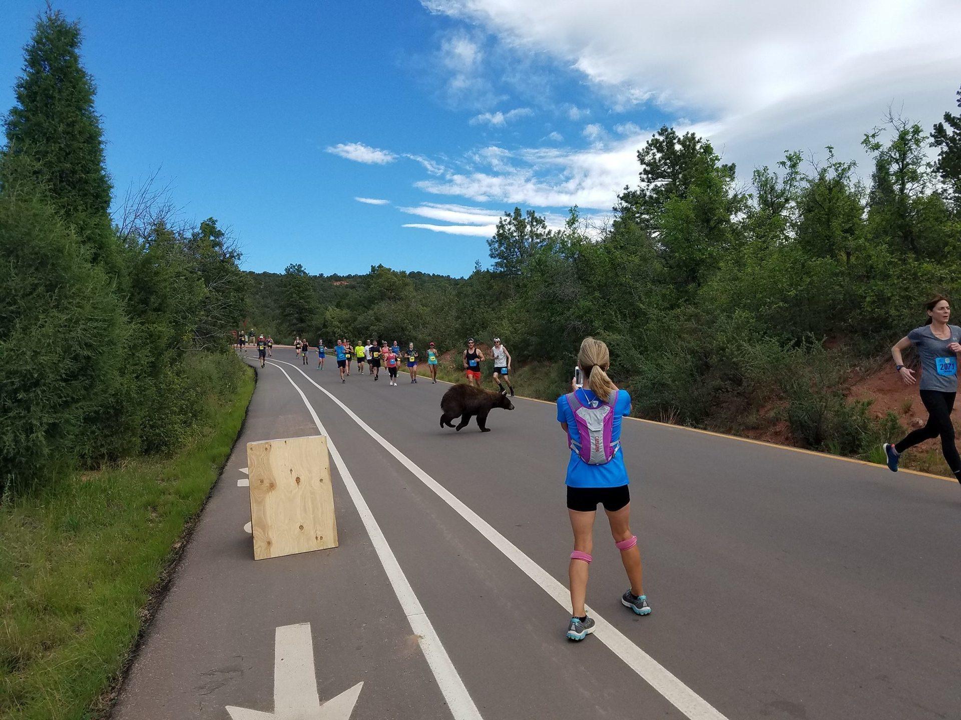 bear in running race4.jpg