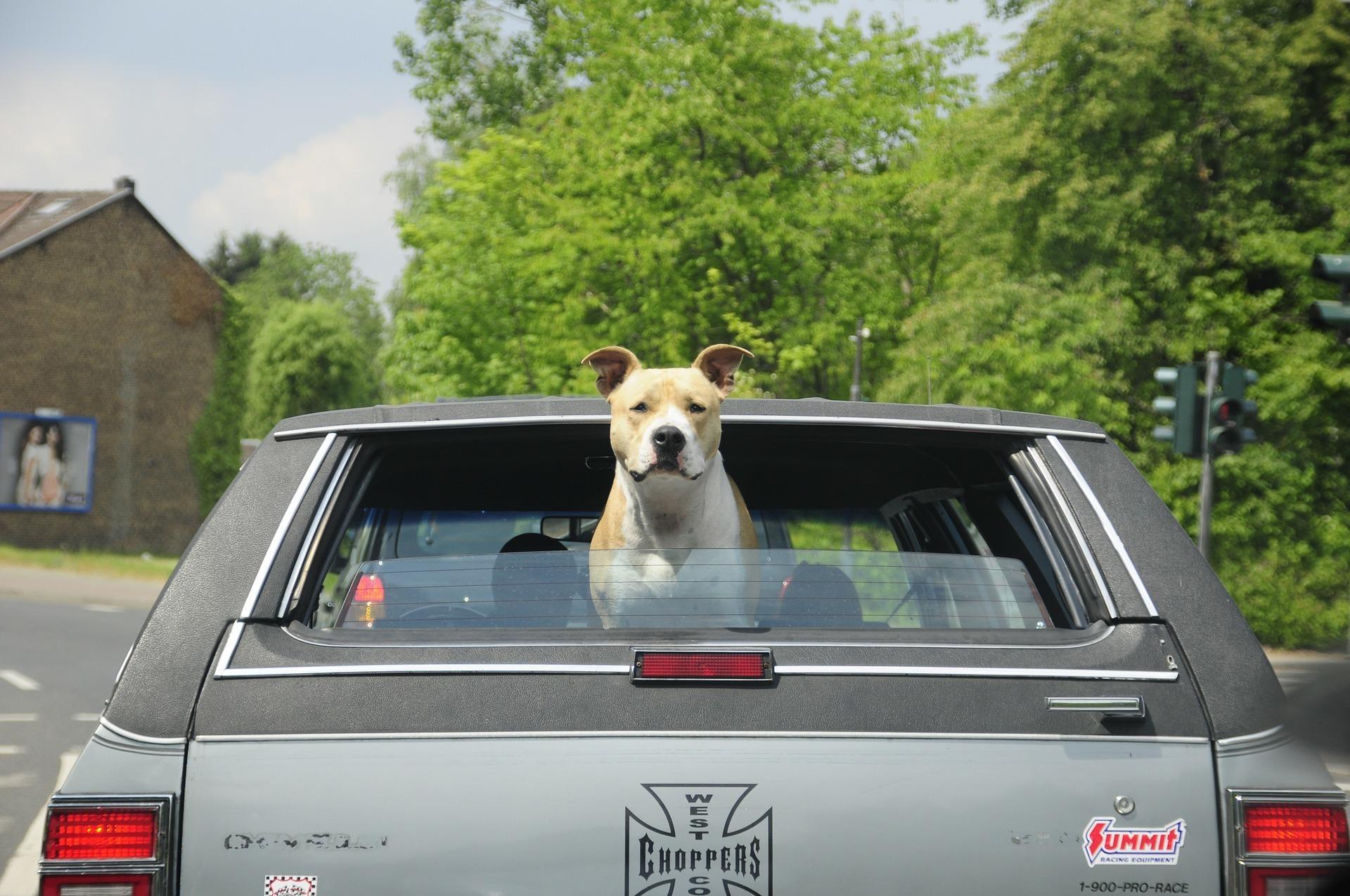 car with a dog.jpg