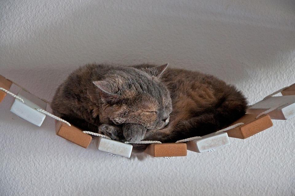 cat-3672761_960_720.jpg