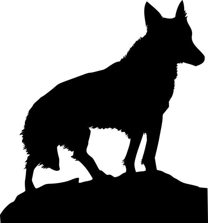 coyote image.jpg