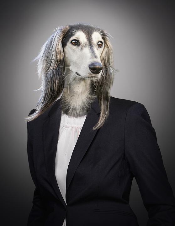 dog-portrait.jpg