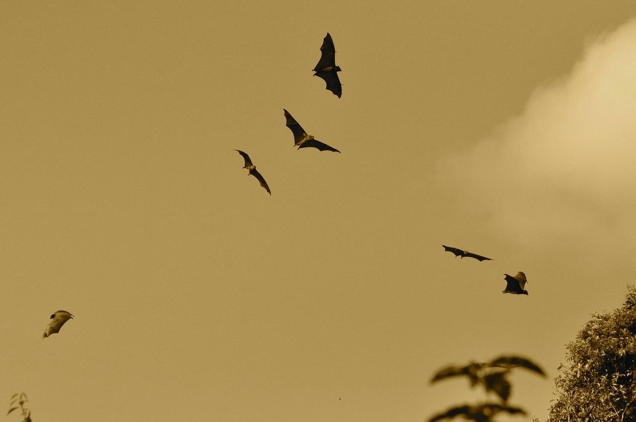 flying bats.jpg