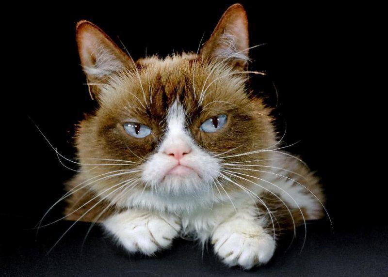 grumpy cat cats1.jpg