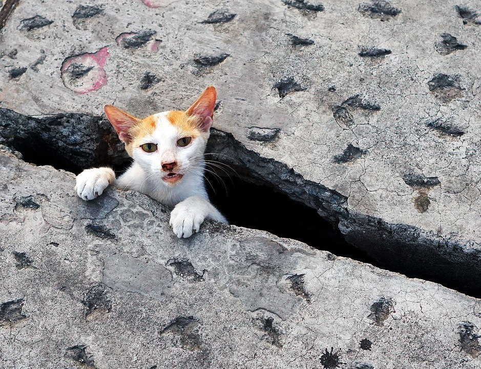 hole cat.jpg