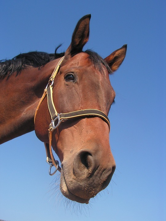 horse with halter.jpg