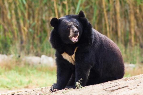 karate skills to fend off bear.jpg