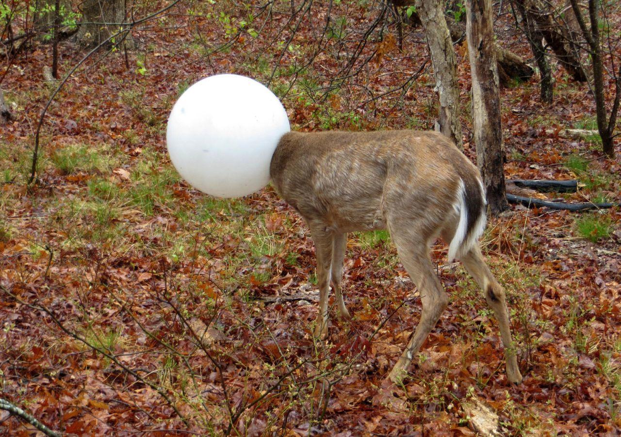 light globe deer.jpg