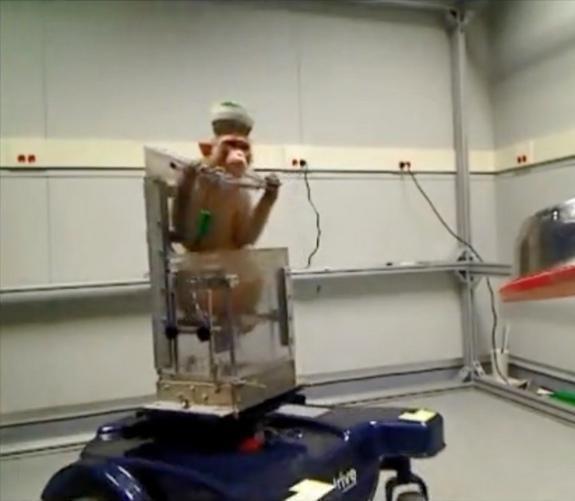 monkey-wheelchair 1.jpg