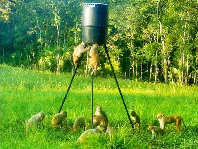monkeys at deer feeder.jpg