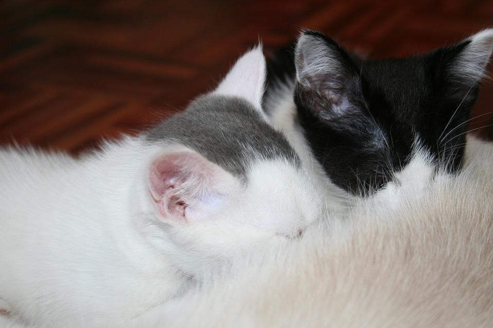 nursing kittens.jpg