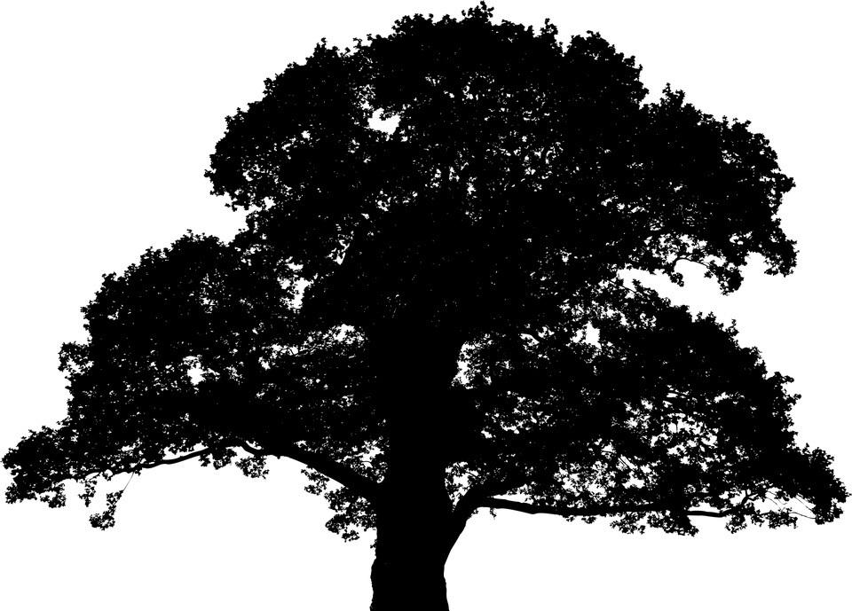oak silhouette.jpg