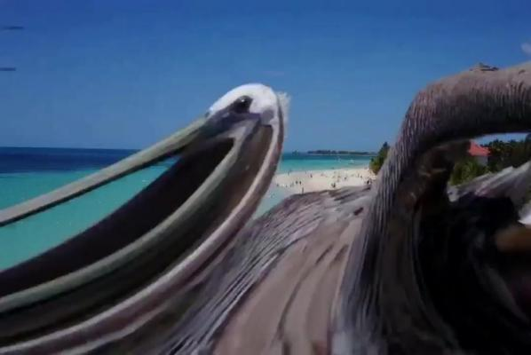pelican knocks drone out of the sky.jpg