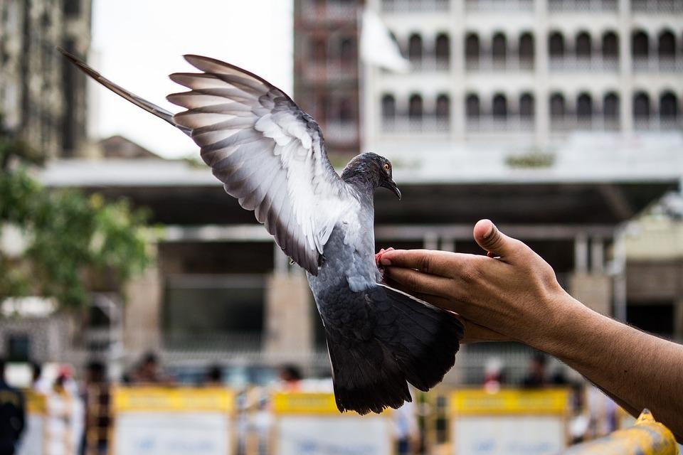 pigeon-hand.jpg