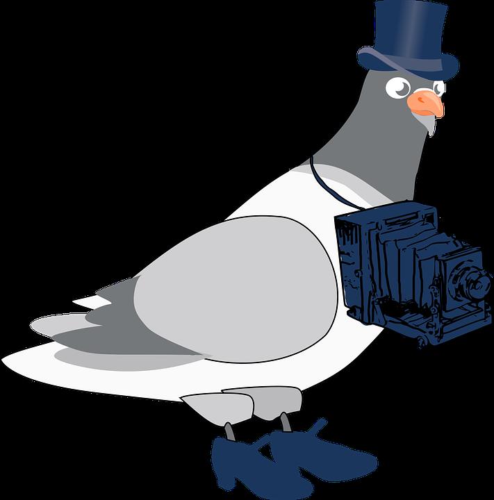 pigeon-photographer.jpeg