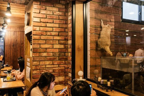 racoon cafe.jpg