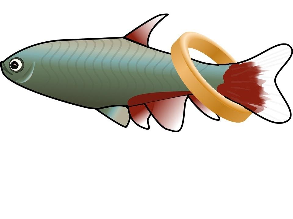 ring-fish.jpg