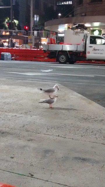 seagull on seagull.jpg