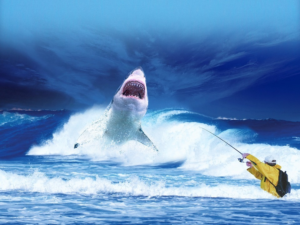 shark-2102330_960_720.jpg