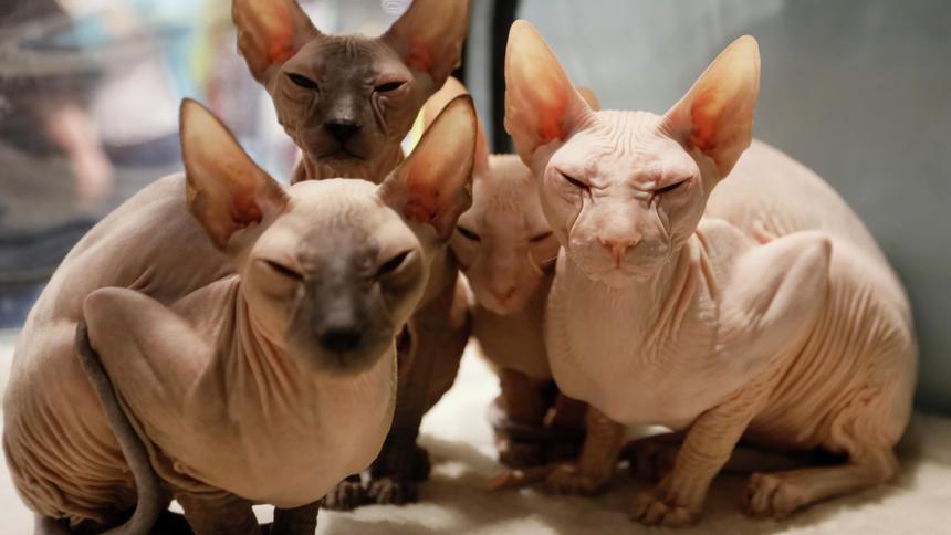 shaving cats.jpg