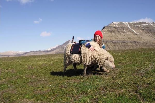 sheep to bring Google street view.jpg