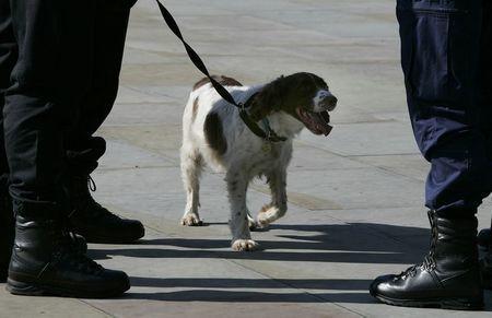 sniffer dog.jpg